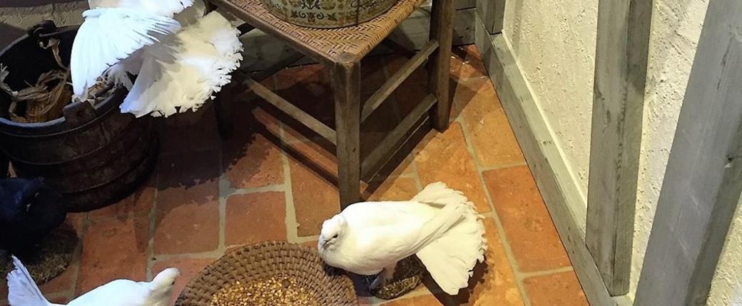 Drážďany a výstava Tři oříšky pro Popelku